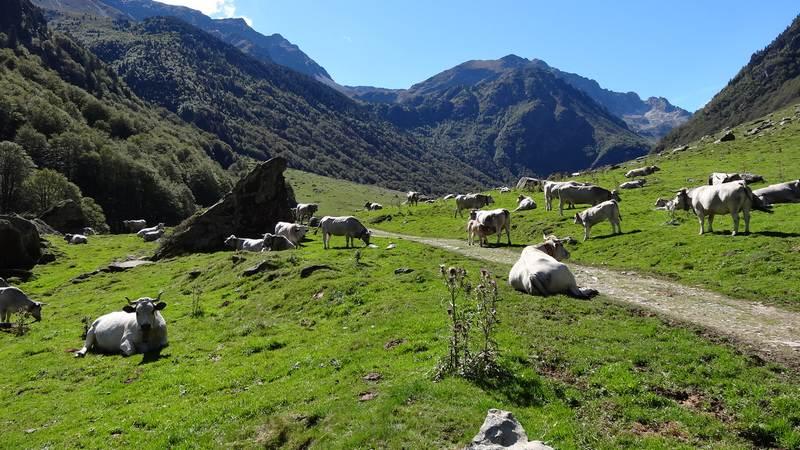 Vallée d'en Guadu